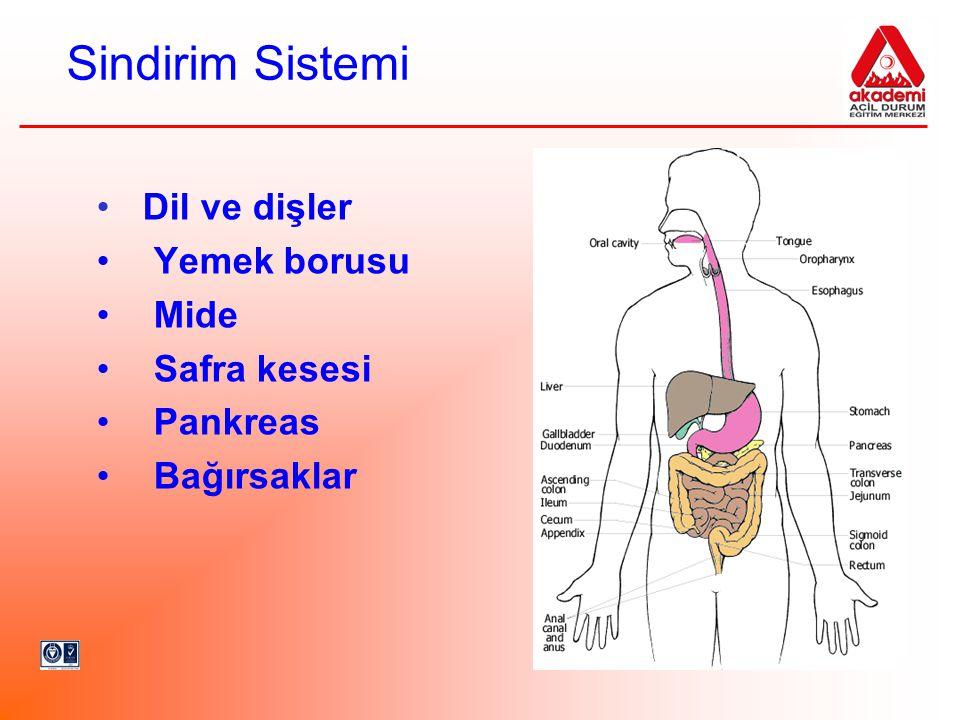 Sindirim Sistemi Dil ve dişler Yemek borusu Mide Safra kesesi Pankreas Bağırsaklar