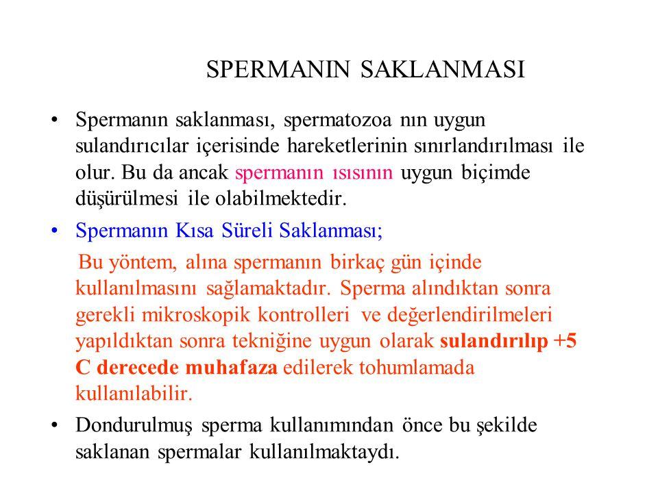 SPERMANIN SAKLANMASI Spermanın saklanması, spermatozoa nın uygun sulandırıcılar içerisinde hareketlerinin sınırlandırılması ile olur. Bu da ancak sper