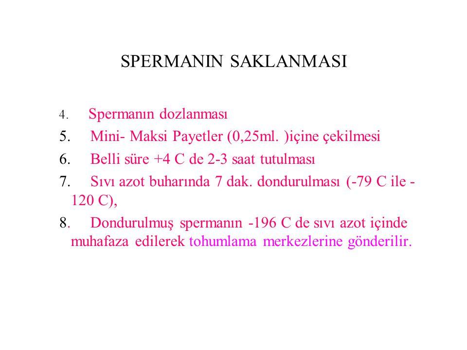 SPERMANIN SAKLANMASI 4. Spermanın dozlanması 5. Mini- Maksi Payetler (0,25ml. )içine çekilmesi 6. Belli süre +4 C de 2-3 saat tutulması 7. Sıvı azot b
