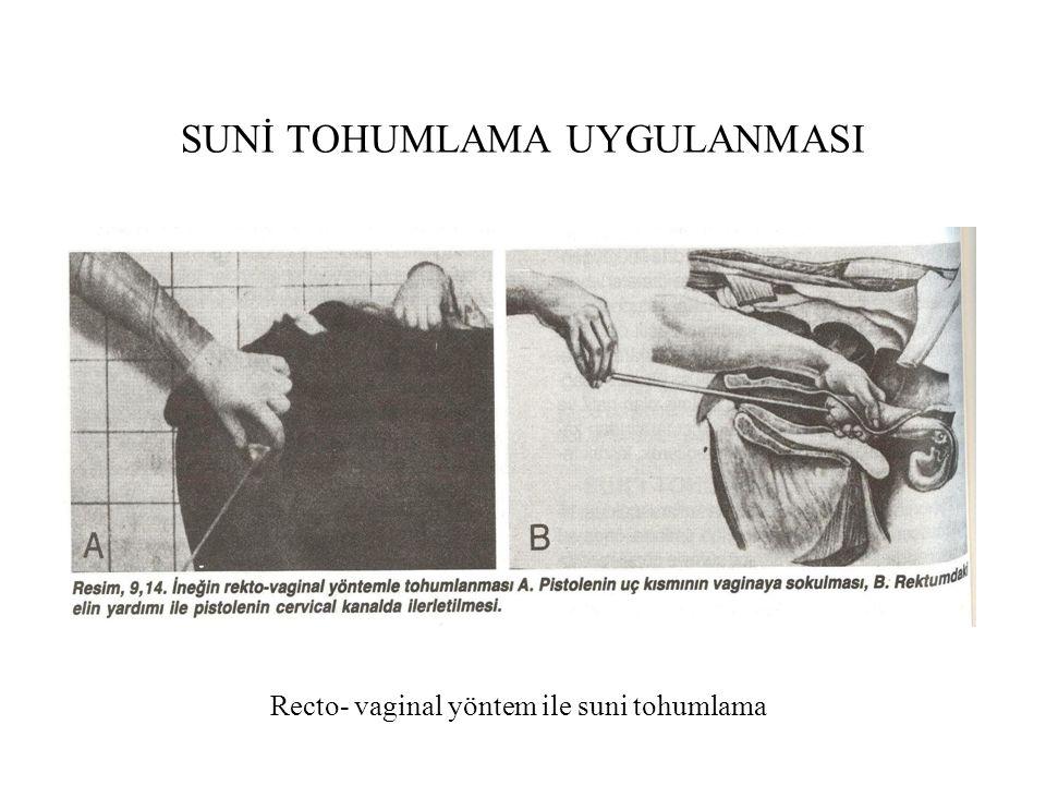 SUNİ TOHUMLAMA UYGULANMASI Recto- vaginal yöntem ile suni tohumlama