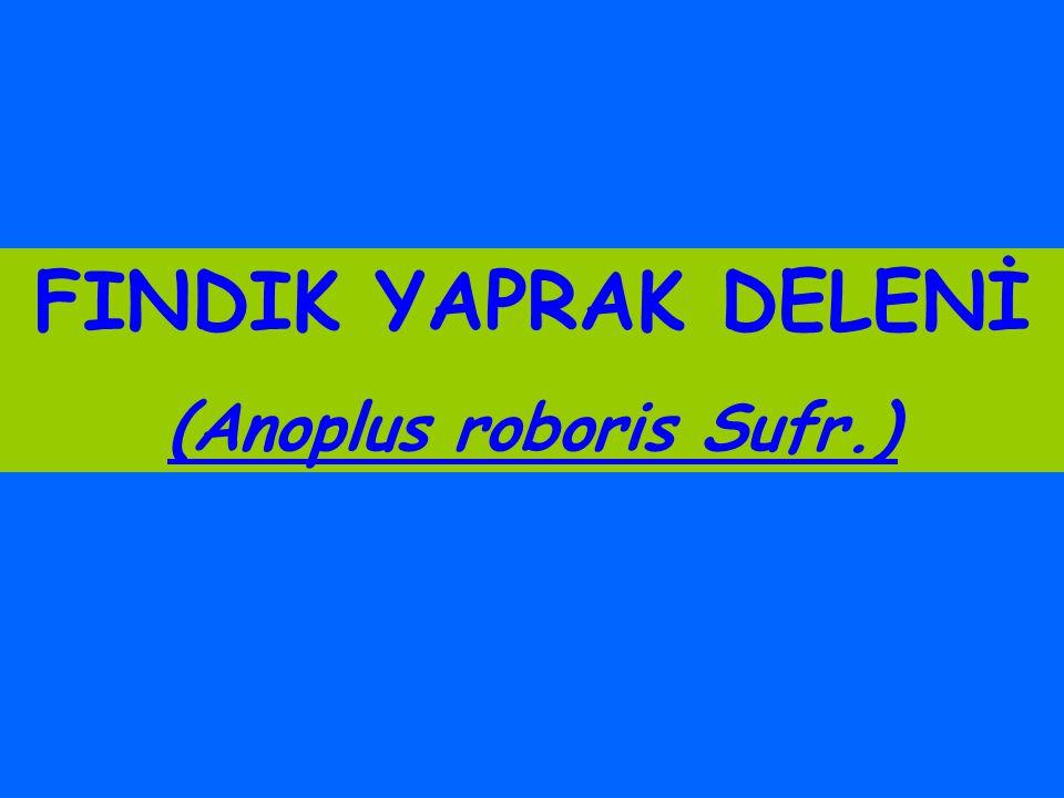 FINDIK YAPRAK DELENİ (Anoplus roboris Sufr.)