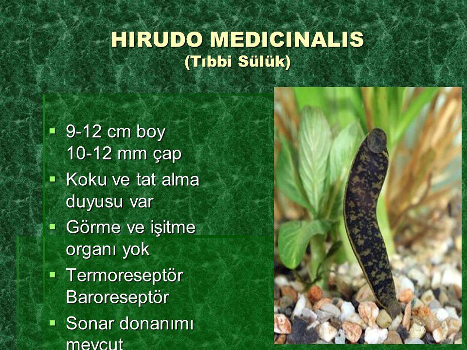 HIRUDO MEDICINALIS (Tıbbi Sülük)  9-12 cm boy 10-12 mm çap  Koku ve tat alma duyusu var  Görme ve işitme organı yok  Termoreseptör Baroreseptör 