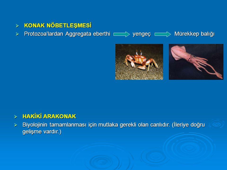  KONAK NÖBETLEŞMESİ  Protozoa'lardan Aggregata eberthi yengeç Mürekkep balığı  HAKİKİ ARAKONAK  Biyolojinin tamamlanması için mutlaka gerekli olan