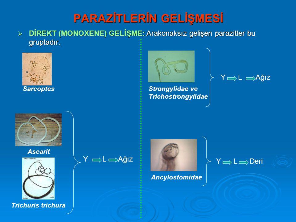 PARAZİTLERİN GELİŞMESİ  DİREKT (MONOXENE) GELİŞME: Arakonaksız gelişen parazitler bu gruptadır. Sarcoptes Ascarit Trichuris trichura Y L Ağız Strongy