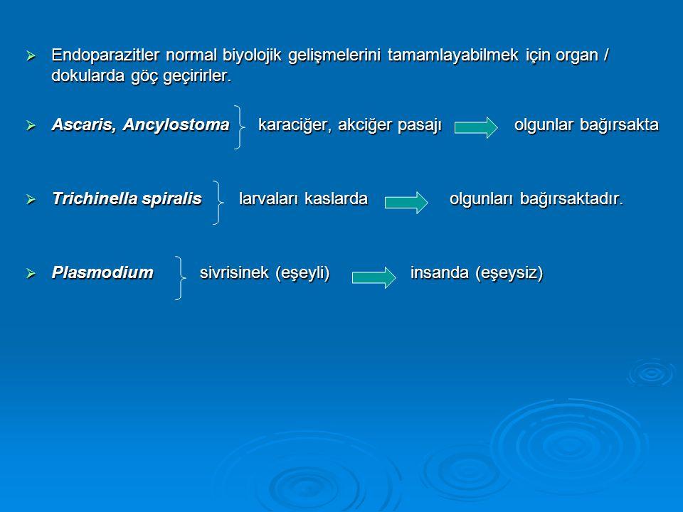  Endoparazitler normal biyolojik gelişmelerini tamamlayabilmek için organ / dokularda göç geçirirler.  Ascaris, Ancylostoma karaciğer, akciğer pasaj