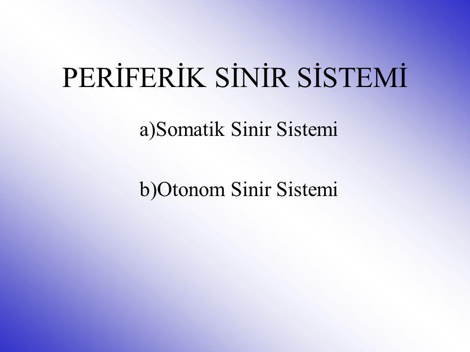 PERİFERİK SİNİR SİSTEMİ a)Somatik Sinir Sistemi b)Otonom Sinir Sistemi