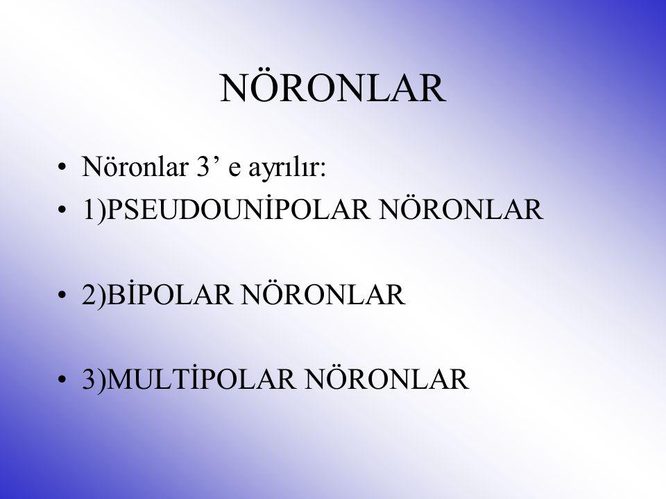 NÖRONLAR Nöronlar 3' e ayrılır: 1)PSEUDOUNİPOLAR NÖRONLAR 2)BİPOLAR NÖRONLAR 3)MULTİPOLAR NÖRONLAR