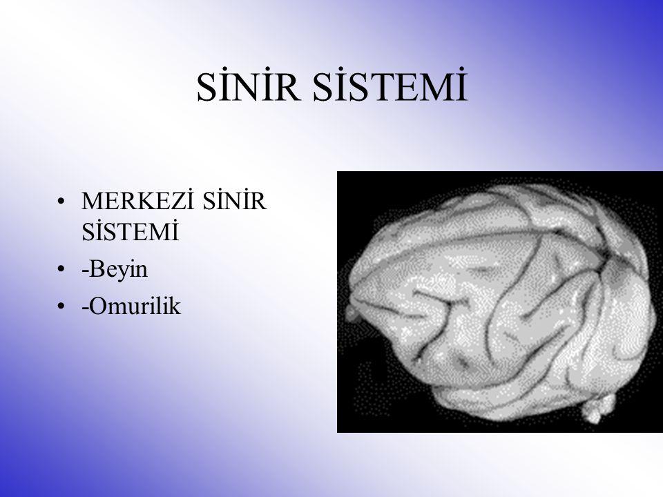 MERKEZİ SİNİR SİSTEMİ -Beyin -Omurilik