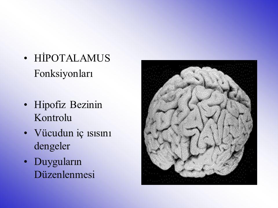HİPOTALAMUS Fonksiyonları Hipofiz Bezinin Kontrolu Vücudun iç ısısını dengeler Duyguların Düzenlenmesi