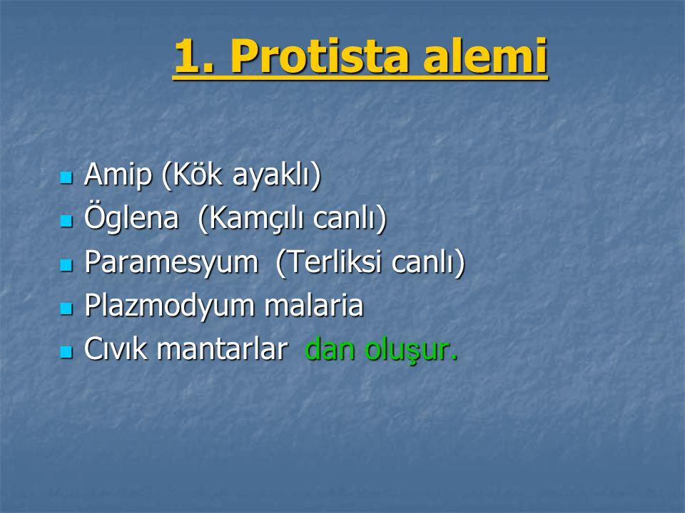 1. Protista alemi Amip (Kök ayaklı) Amip (Kök ayaklı) Öglena (Kamçılı canlı) Öglena (Kamçılı canlı) Paramesyum (Terliksi canlı) Paramesyum (Terliksi c