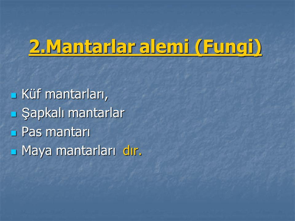 2.Mantarlar alemi (Fungi) Küf mantarları, Küf mantarları, Ş apkalı mantarlar Ş apkalı mantarlar Pas mantarı Pas mantarı Maya mantarları dır. Maya mant