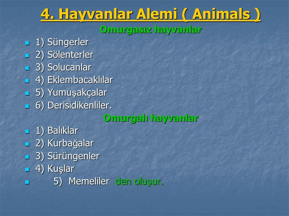 4. Hayvanlar Alemi ( Animals ) Omurgasız hayvanlar 1) Süngerler 1) Süngerler 2) Sölenterler 2) Sölenterler 3) Solucanlar 3) Solucanlar 4) Eklembacaklı