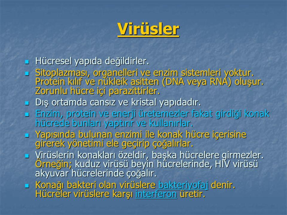 Virüsler Hücresel yapıda de ğ ildirler. Hücresel yapıda de ğ ildirler. Sitoplazması, organelleri ve enzim sistemleri yoktur. Protein kılıf ve nükleik