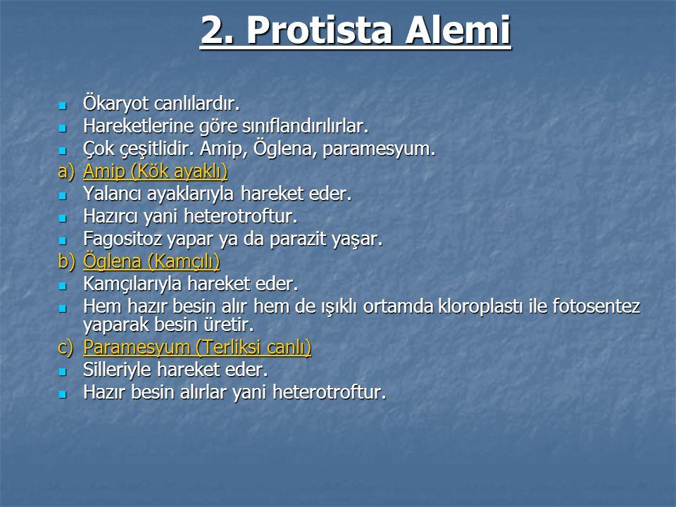 2. Protista Alemi Ökaryot canlılardır. Ökaryot canlılardır. Hareketlerine göre sınıflandırılırlar. Hareketlerine göre sınıflandırılırlar. Çok çe ş itl