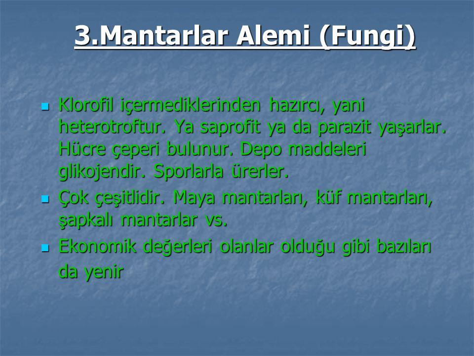 3.Mantarlar Alemi (Fungi) Klorofil içermediklerinden hazırcı, yani heterotroftur. Ya saprofit ya da parazit ya ş arlar. Hücre çeperi bulunur. Depo mad