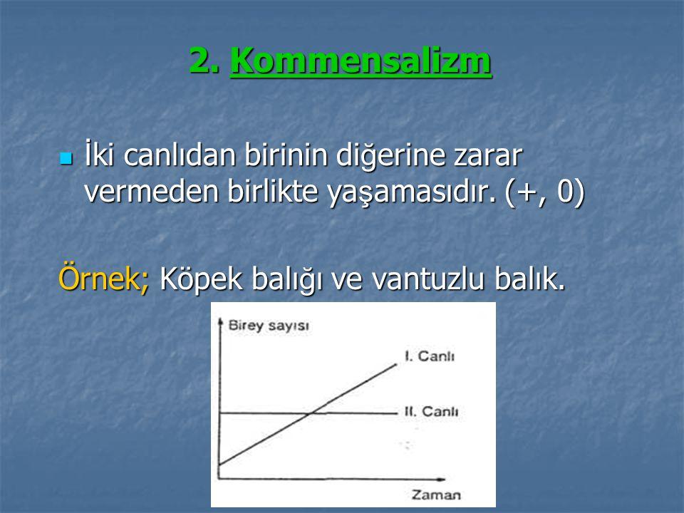 2. Kommensalizm İ ki canlıdan birinin di ğ erine zarar vermeden birlikte ya ş amasıdır. (+, 0) İ ki canlıdan birinin di ğ erine zarar vermeden birlikt