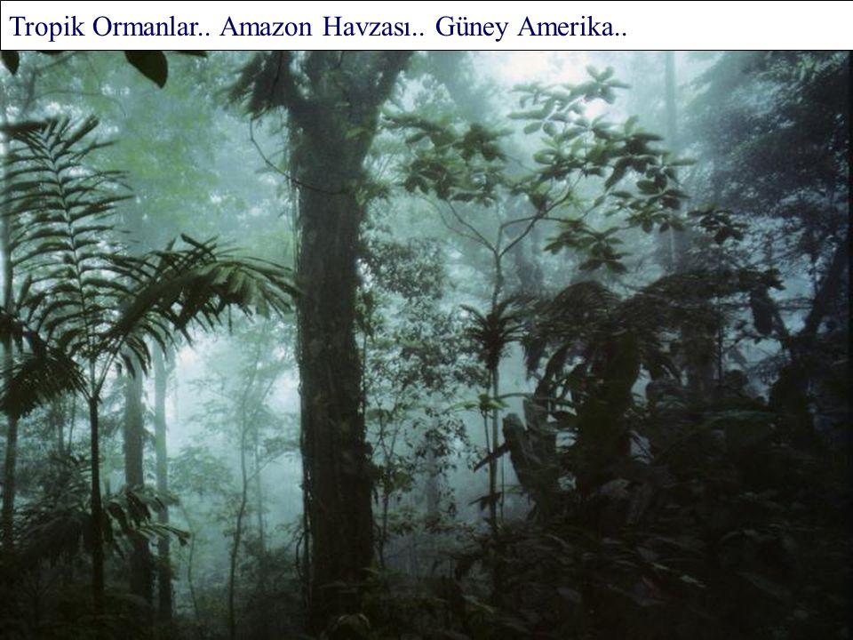Yağmur Ormanı.. Victoria.. Avustralya..