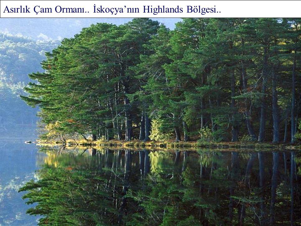 Tipik Bir Ilıman Orman.. İç İçe Geçmiş Asırlık Ağaçlar ve Fidanlar.. Polonya..