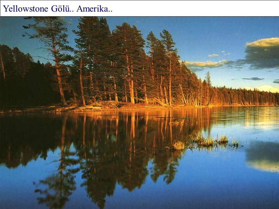 Baykal Gölü Kıyılarına Yaslanan Ağaç Denizi.. Asya..