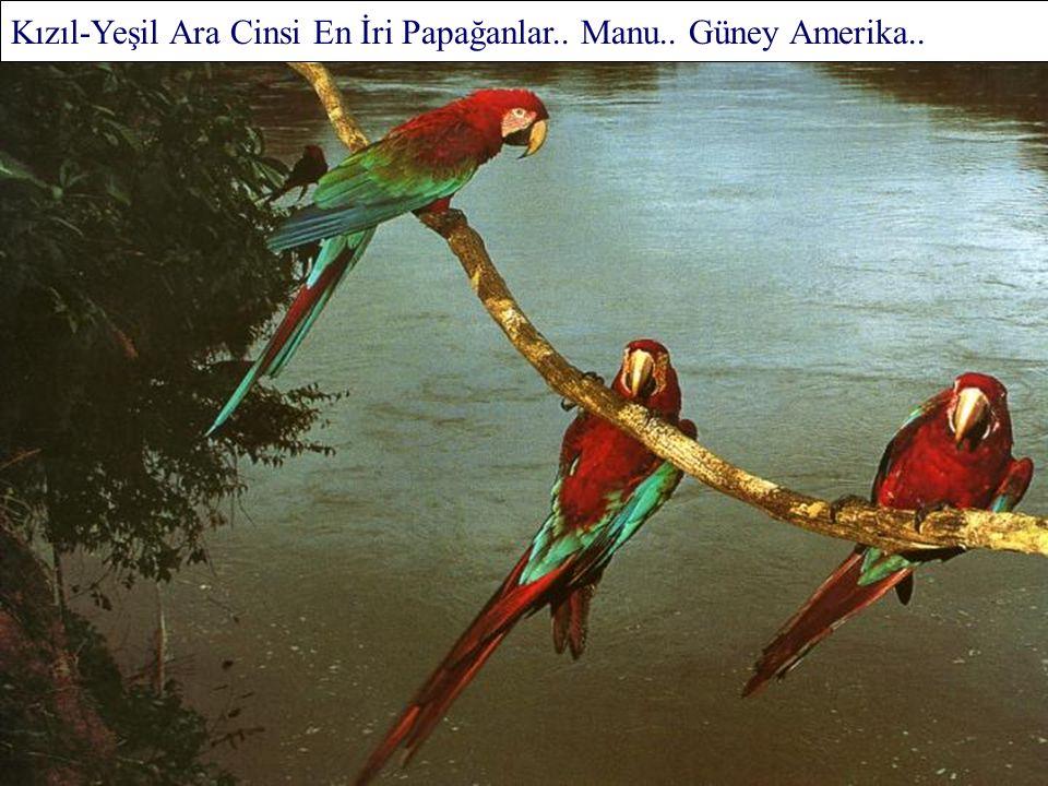 Galapagos.. Güney Amerika..
