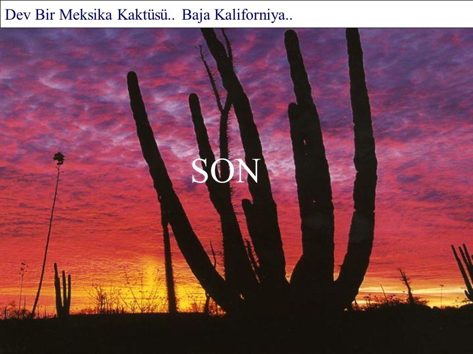 Yalnızlığın Bekçileri.. Kalaloch Kıyı Şeridi.. Kuzey Amerika..