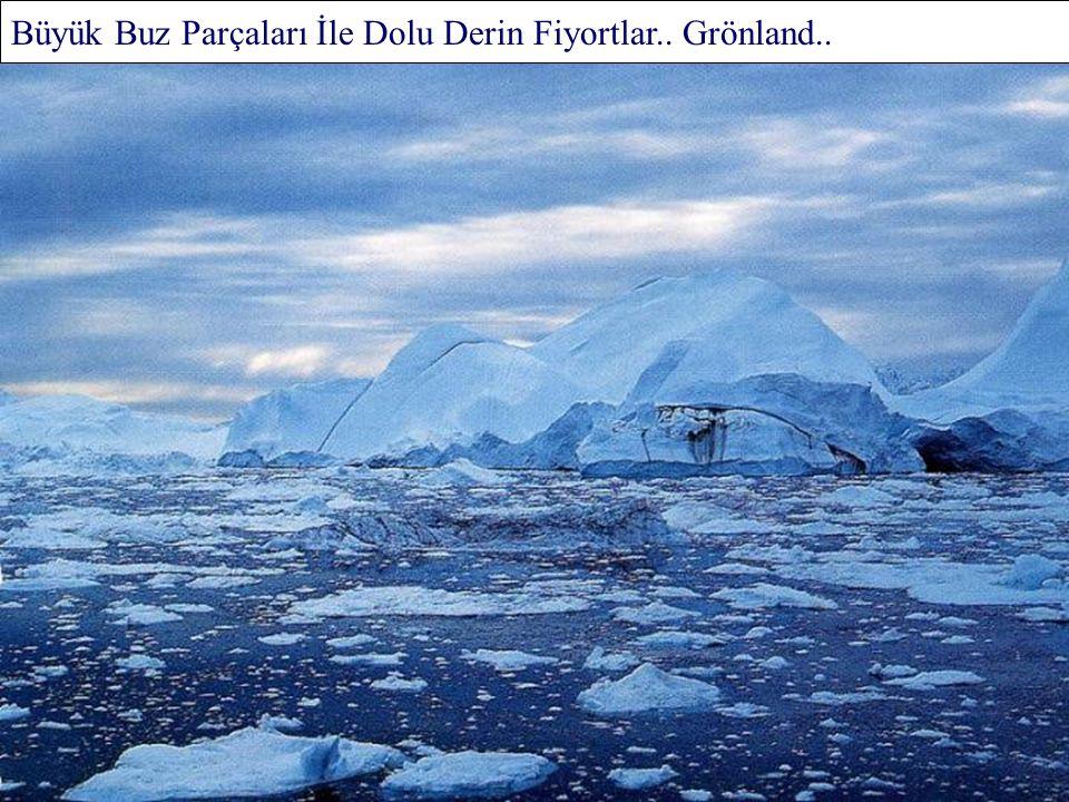 Kaygan Yamaçlara Tırmanan Gülen Penguenler.. Antartika Yarımadası..