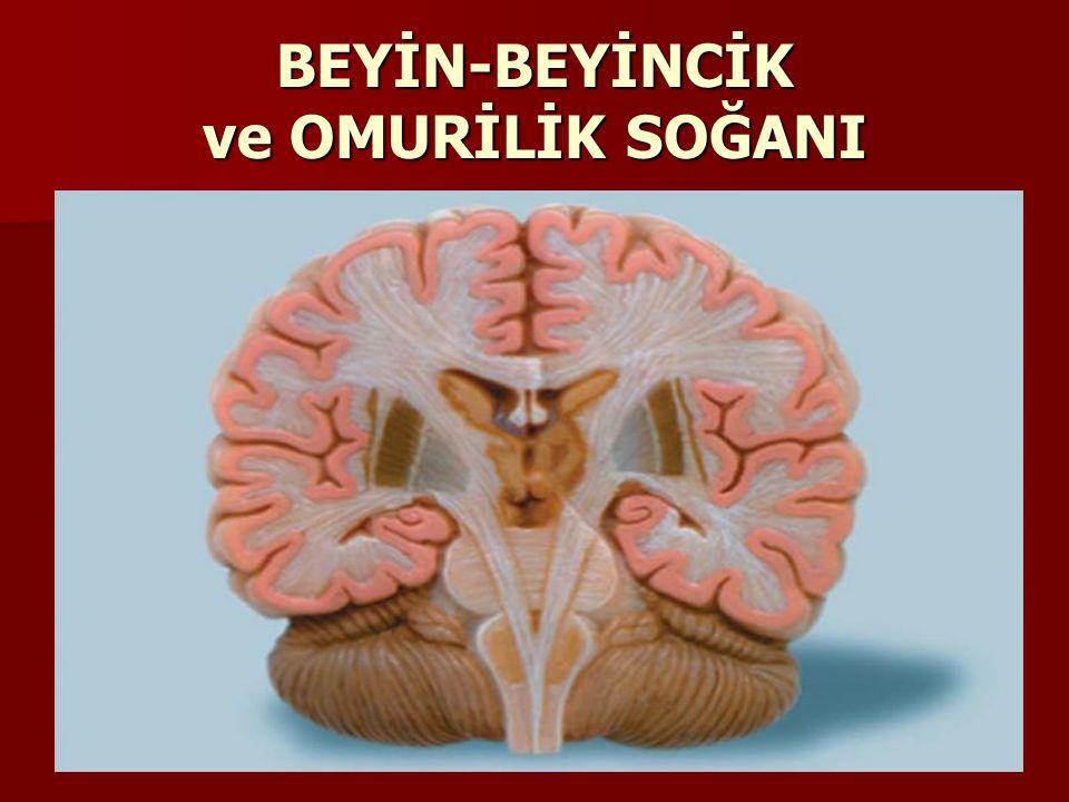 BEYİNCİK Başımızda,Beynimizin altında yer alır.