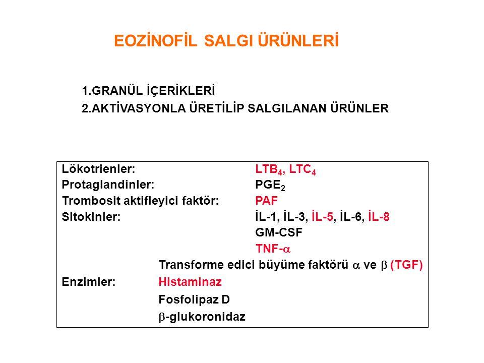 Lökotrienler:LTB 4, LTC 4 Protaglandinler:PGE 2 Trombosit aktifleyici faktör:PAF Sitokinler:İL-1, İL-3, İL-5, İL-6, İL-8 GM-CSF TNF-  Transforme edic