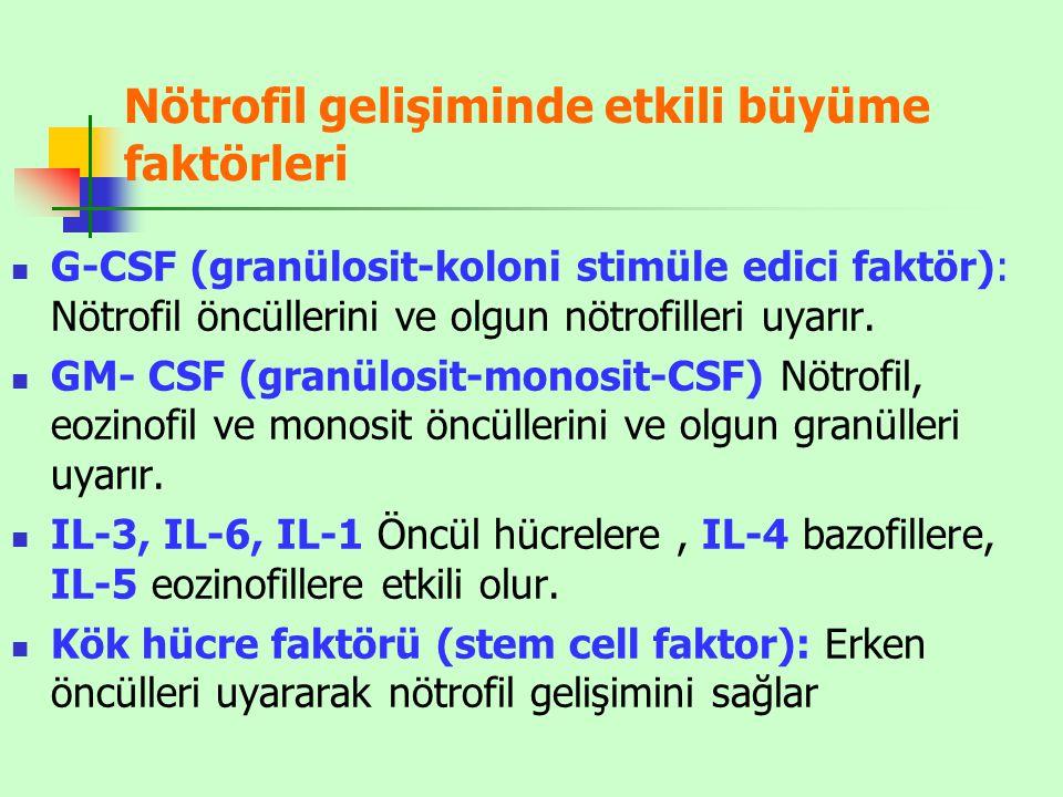Nötrofil gelişiminde etkili büyüme faktörleri G-CSF (granülosit-koloni stimüle edici faktör): Nötrofil öncüllerini ve olgun nötrofilleri uyarır.
