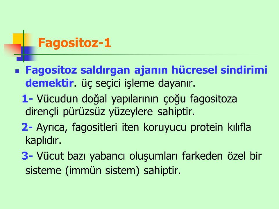 Fagositoz-1 Fagositoz saldırgan ajanın hücresel sindirimi demektir.
