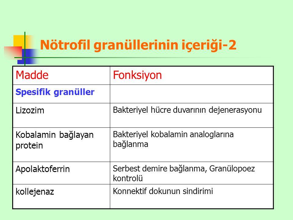 Nötrofil granüllerinin içeriği-2 MaddeFonksiyon Spesifik granüller Lizozim Bakteriyel hücre duvarının dejenerasyonu Kobalamin bağlayan protein Bakteriyel kobalamin analoglarına bağlanma Apolaktoferrin Serbest demire bağlanma, Granülopoez kontrolü kollejenaz Konnektif dokunun sindirimi