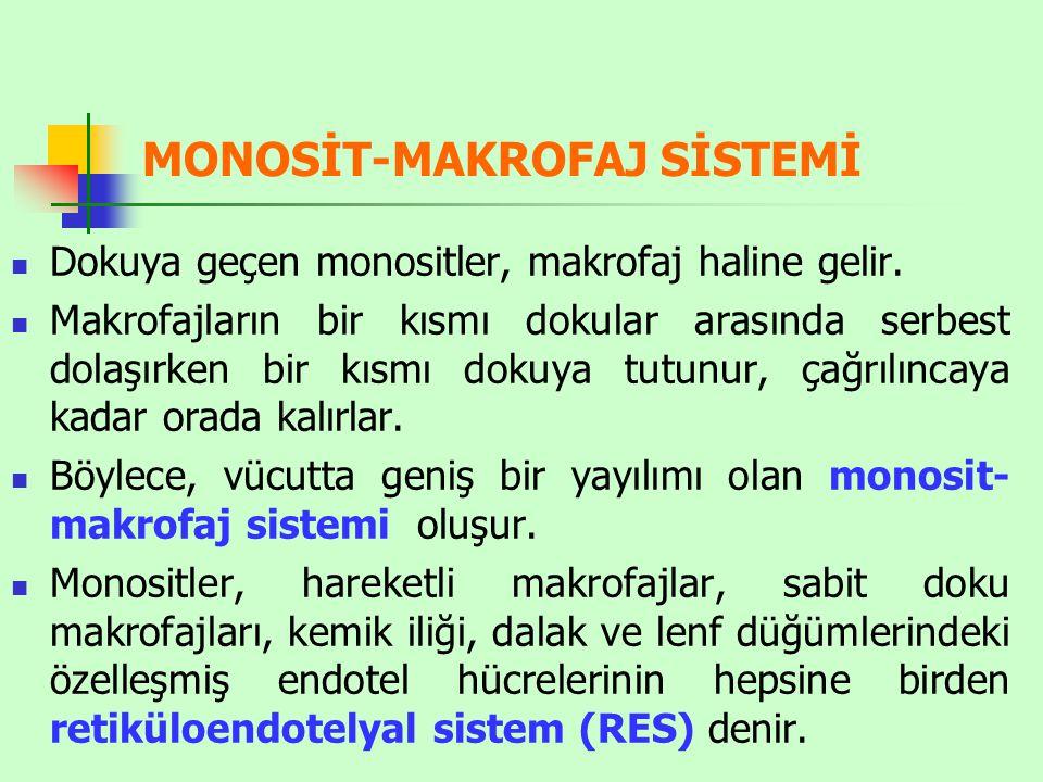 MONOSİT-MAKROFAJ SİSTEMİ Dokuya geçen monositler, makrofaj haline gelir.