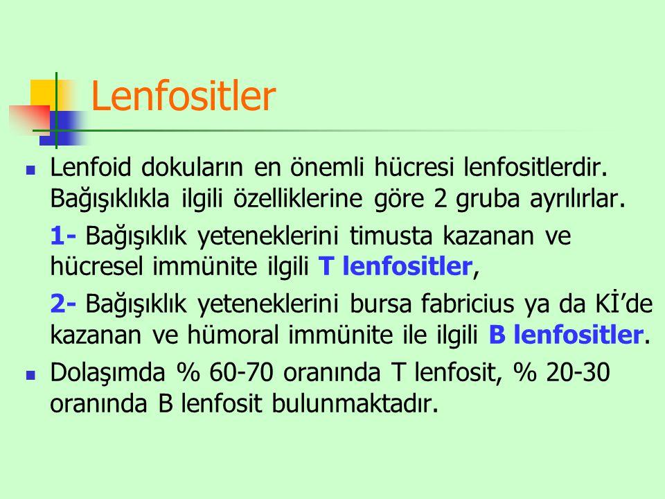 Lenfositler Lenfoid dokuların en önemli hücresi lenfositlerdir.