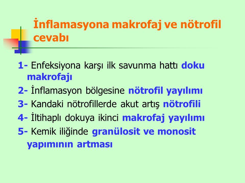İnflamasyona makrofaj ve nötrofil cevabı 1- Enfeksiyona karşı ilk savunma hattı doku makrofajı 2- İnflamasyon bölgesine nötrofil yayılımı 3- Kandaki nötrofillerde akut artış nötrofili 4- İltihaplı dokuya ikinci makrofaj yayılımı 5- Kemik iliğinde granülosit ve monosit yapımının artması