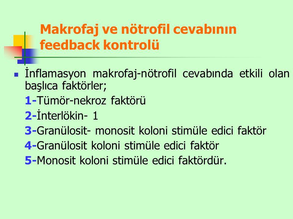 Makrofaj ve nötrofil cevabının feedback kontrolü İnflamasyon makrofaj-nötrofil cevabında etkili olan başlıca faktörler; 1-Tümör-nekroz faktörü 2-İnterlökin- 1 3-Granülosit- monosit koloni stimüle edici faktör 4-Granülosit koloni stimüle edici faktör 5-Monosit koloni stimüle edici faktördür.