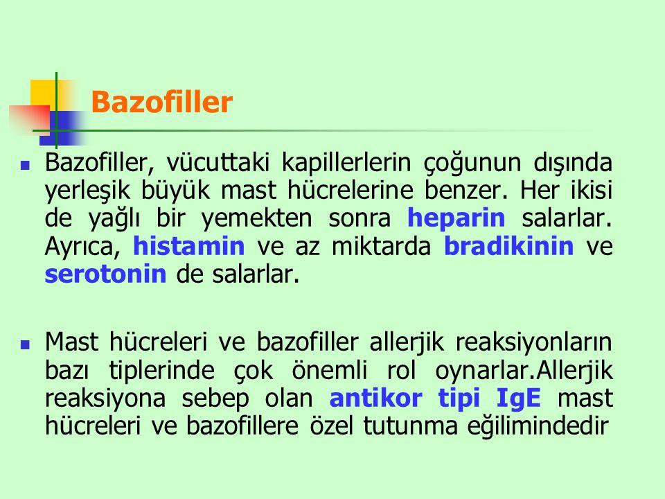 Bazofiller Bazofiller, vücuttaki kapillerlerin çoğunun dışında yerleşik büyük mast hücrelerine benzer.