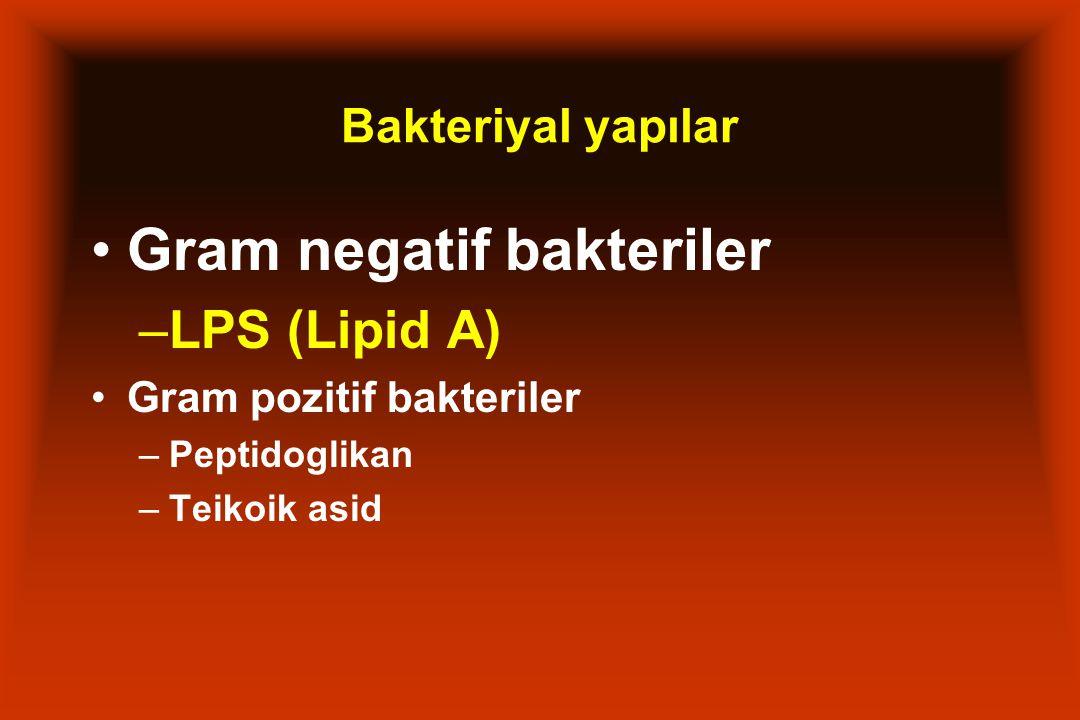 Bakteriyal yapılar Gram negatif bakteriler –LPS (Lipid A) Gram pozitif bakteriler –Peptidoglikan –Teikoik asid