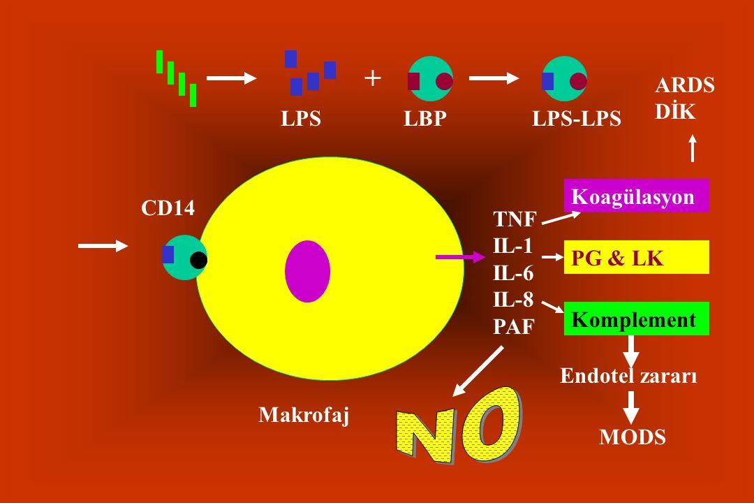 LPS + LBPLPS-LPS CD14 Makrofaj TNF IL-1 IL-6 IL-8 PAF Koagülasyon PG & LK Komplement ARDS DİK Endotel zararı MODS