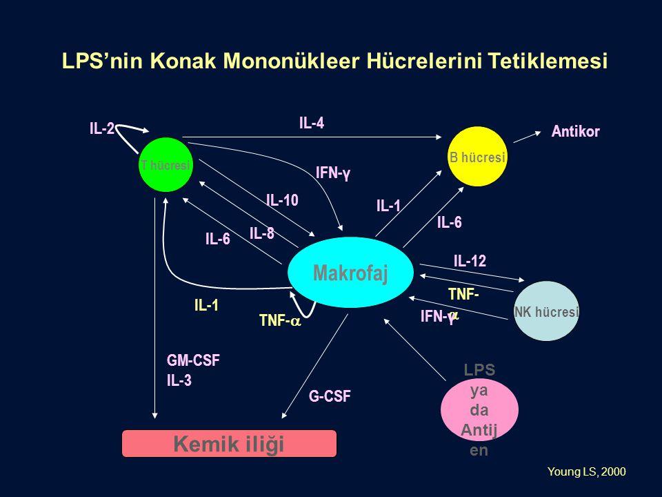 Makrofaj T hücresi B hücresi NK hücresi Kemik iliği GM-CSF IL-3 G-CSF TNF-  IL-1 IL-6 IL-8 IL-10 IFN-γ IL-2 IL-4 IL-1 IL-6 Antikor IL-12 TNF-  IFN-γ