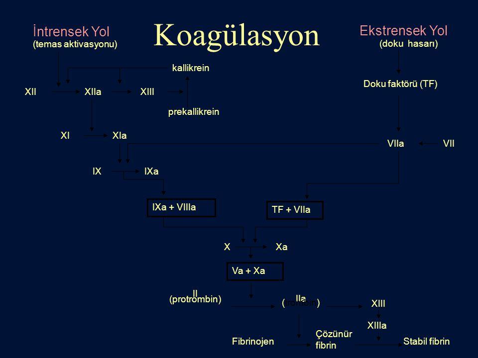 Koagülasyon İntrensek Yol Ekstrensek Yol (doku hasarı) XIIXIIaXIII prekallikrein kallikrein XIXIa IXIXa IXa + VIIIa XXa Va + Xa II (protrombin) IIa (t