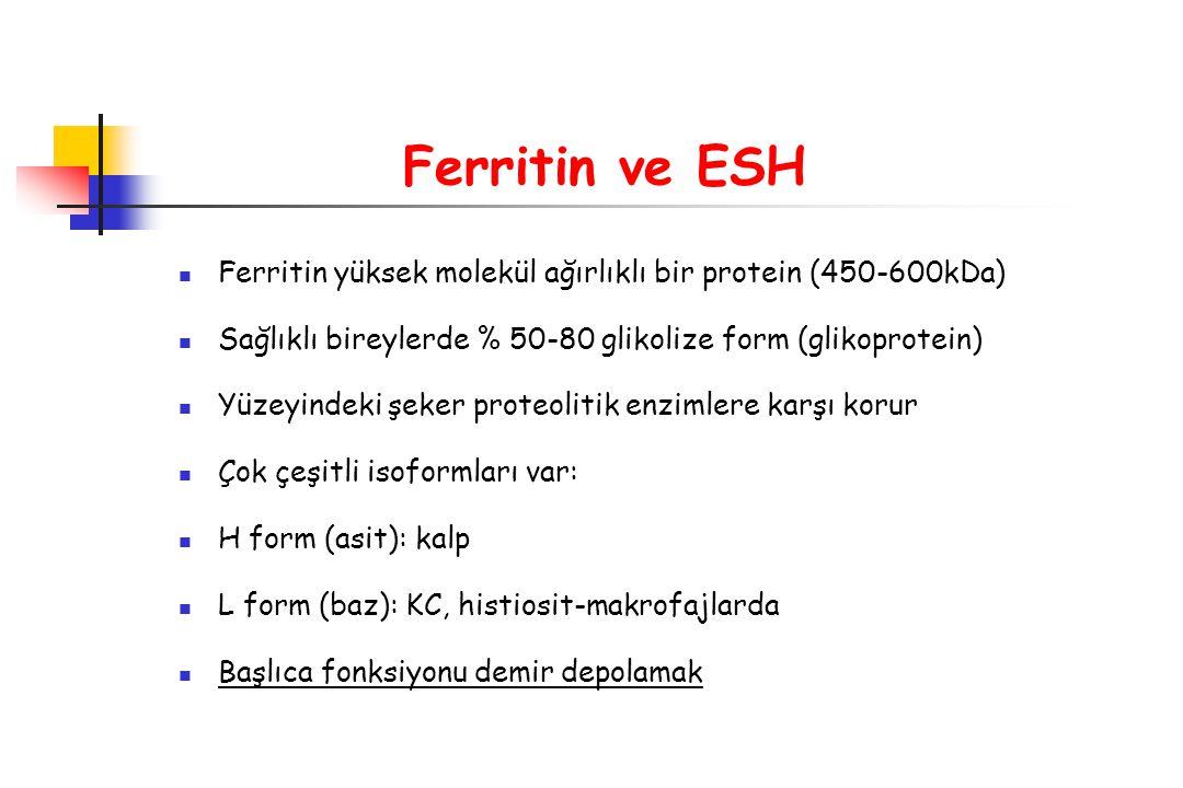 Ferritin ve ESH Ferritin yüksek molekül ağırlıklı bir protein (450-600kDa) Sağlıklı bireylerde % 50-80 glikolize form (glikoprotein) Yüzeyindeki şeker