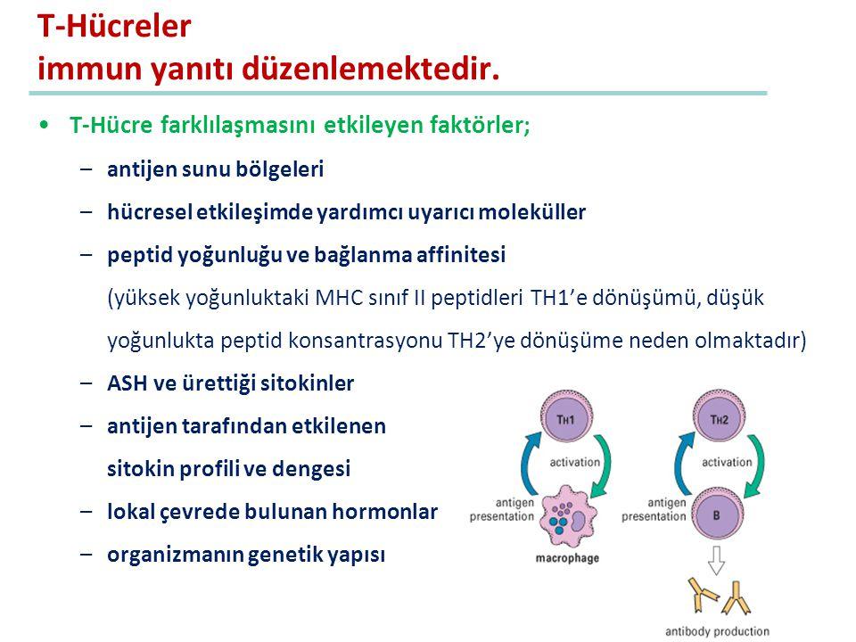 T-Hücreler immun yanıtı düzenlemektedir. T-Hücre farklılaşmasını etkileyen faktörler; –antijen sunu bölgeleri –hücresel etkileşimde yardımcı uyarıcı m