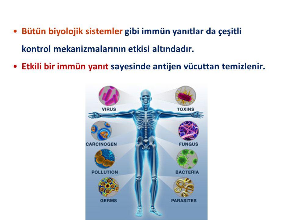 Bütün biyolojik sistemler gibi immün yanıtlar da çeşitli kontrol mekanizmalarının etkisi altındadır. Etkili bir immün yanıt sayesinde antijen vücuttan