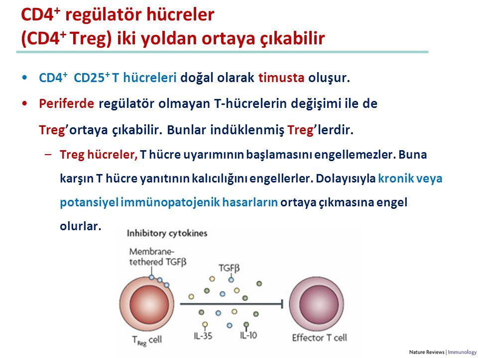 CD4 + regülatör hücreler (CD4 + Treg) iki yoldan ortaya çıkabilir CD4 + CD25 + T hücreleri doğal olarak timusta oluşur. Periferde regülatör olmayan T-