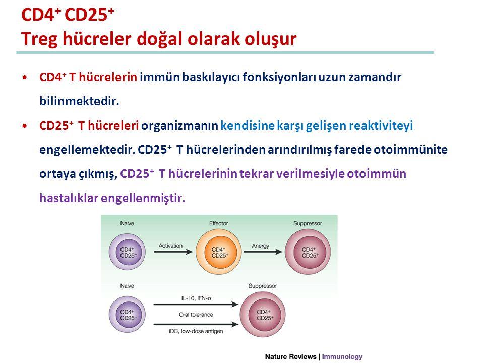 CD4 + CD25 + Treg hücreler doğal olarak oluşur CD4 + T hücrelerin immün baskılayıcı fonksiyonları uzun zamandır bilinmektedir. CD25 + T hücreleri orga