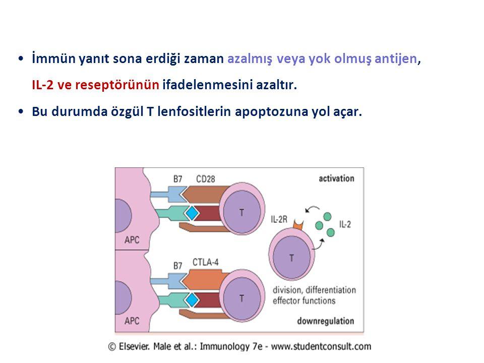 İmmün yanıt sona erdiği zaman azalmış veya yok olmuş antijen, IL-2 ve reseptörünün ifadelenmesini azaltır. Bu durumda özgül T lenfositlerin apoptozuna