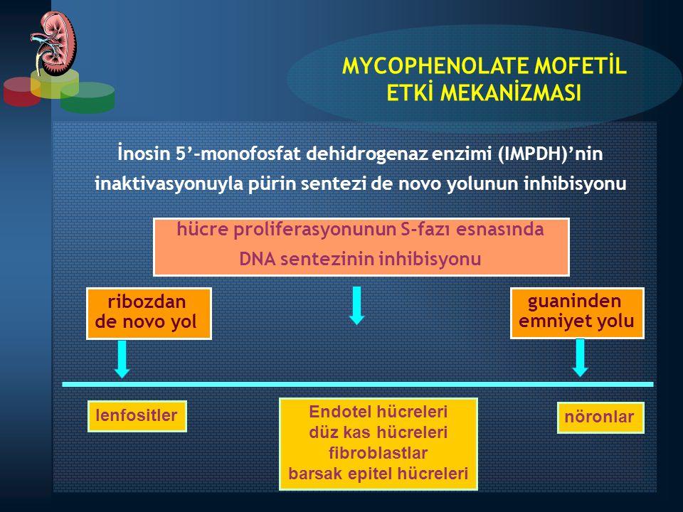 İnosin 5'-monofosfat dehidrogenaz enzimi (IMPDH)'nin inaktivasyonuyla pürin sentezi de novo yolunun inhibisyonu hücre proliferasyonunun S-fazı esnasın