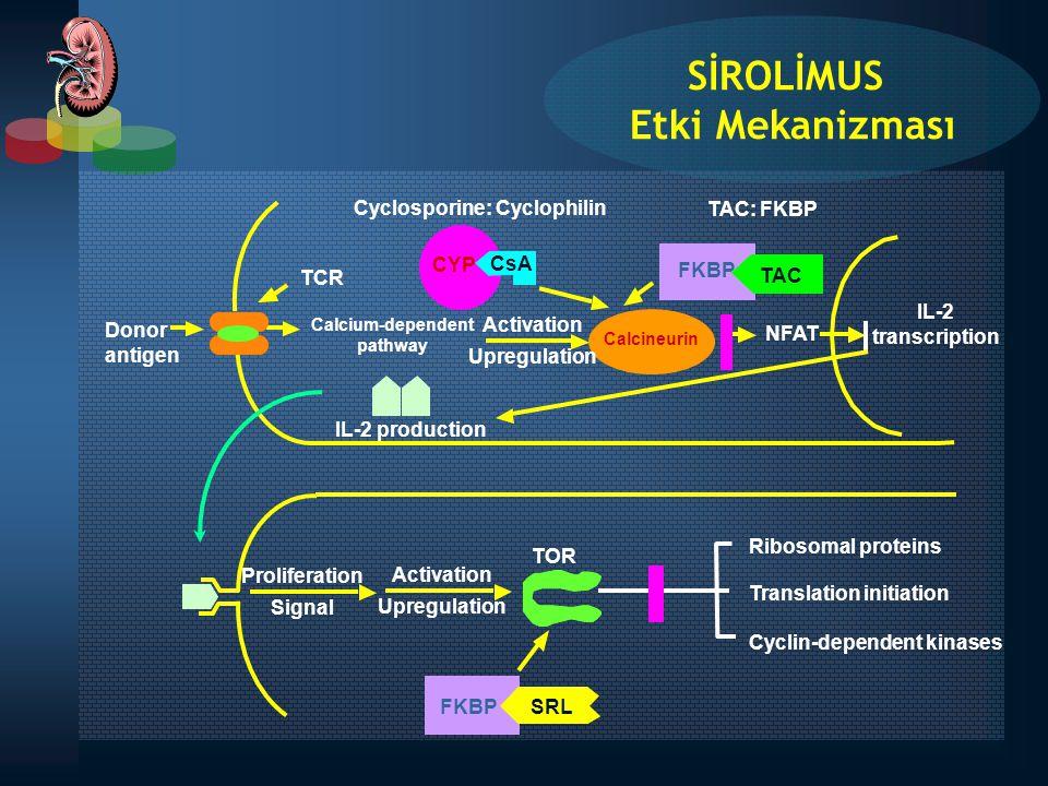 IL-2 transcription Cyclosporine: Cyclophilin CYP CsA TCR Donor antigen Calcium-dependent pathway Activation Upregulation FKBP TAC NFAT Calcineurin Rib