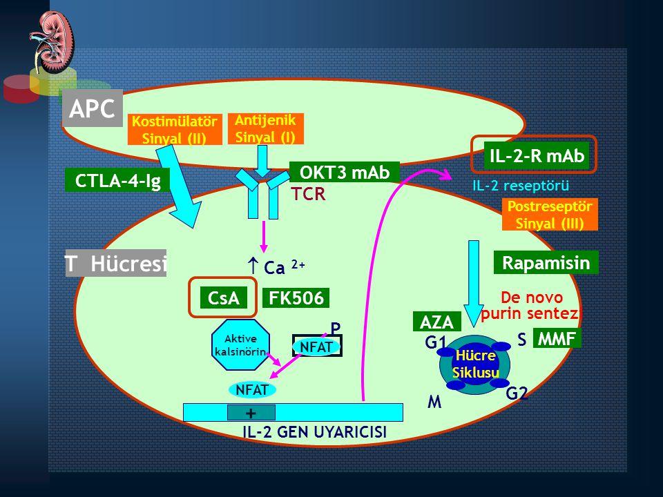 Kostimülatör Sinyal (II) Antijenik Sinyal (I) APC IL-2-R mAb Rapamisin MMF AZA FK506 CsA T Hücresi TCR  Ca 2+ NFAT Aktive kalsinörin Hücre Siklusu +
