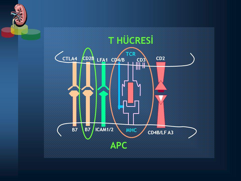 IL-2 transcription Cyclosporine: Cyclophilin CYP CsA TCR Donor antigen Calcium-dependent pathway Activation Upregulation FKBP TAC NFAT Calcineurin Ribosomal proteins Translation initiation Cyclin-dependent kinases TOR FKBPSRL Activation Upregulation Proliferation Signal TAC: FKBP IL-2 production SİROLİMUS Etki Mekanizması